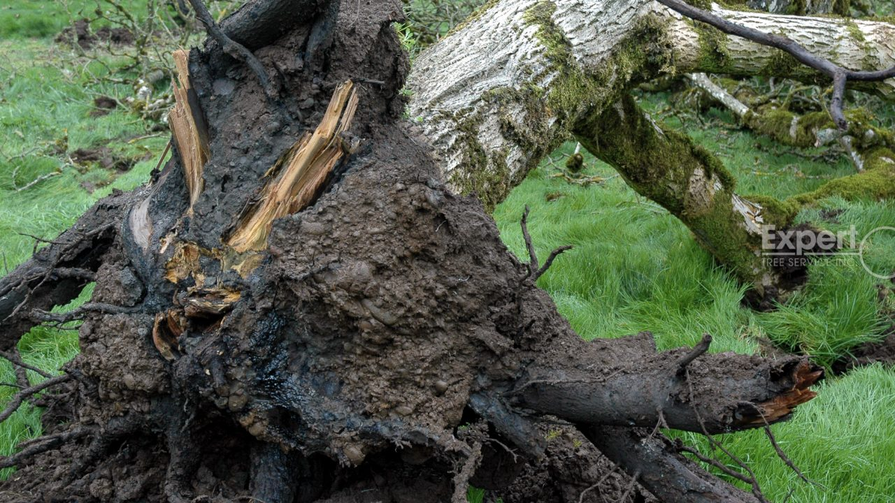 Tree Rot and How to Recognize It