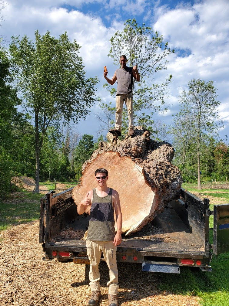 tree removal, tree trimming