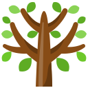 expert tree service